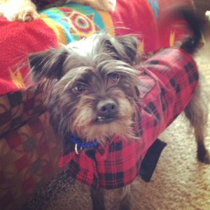 Lumberjack dog jacket