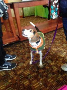 Life With Beagle