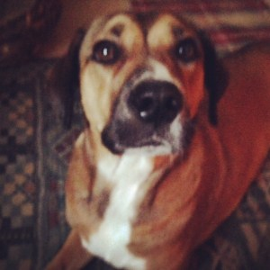 Mercy the Black Cur mix
