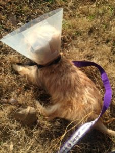 Soaking up sunshine is better with a cone