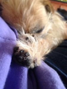 Speak to the paw!