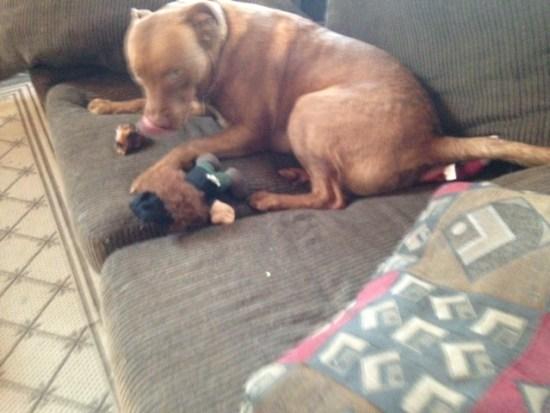 Knee Cap from Jones Natural Chews - not just for puppies