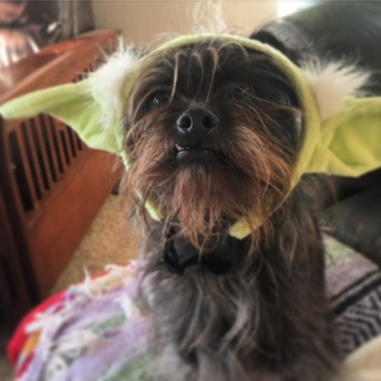 "Chewbacca/Yoda says, ""May the Fourth be with you"""