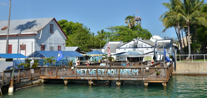 acuario-key-west-03
