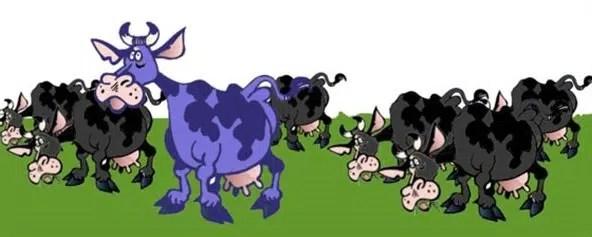 mucca-viola