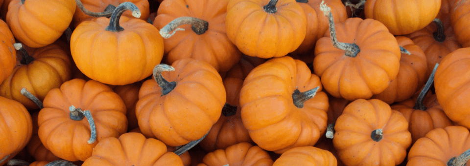 Pumpkin Patches, Mazes, and Hayrides