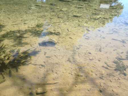 jolly-mill-clear-water