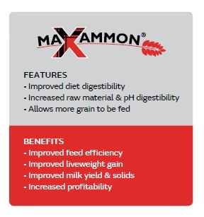 maxammon features and benefits chart