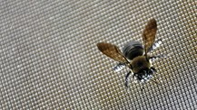 Insect Screens category page & drop on pic