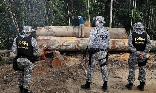 Amazônia - Permanência da Força Nacional foi prorrogada