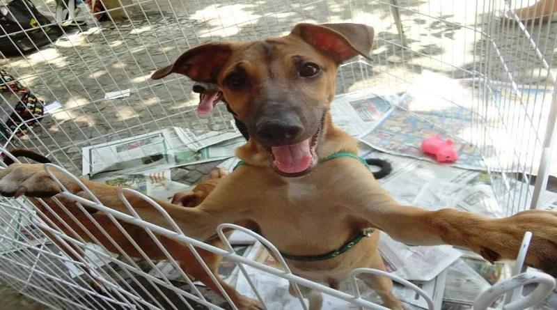 Lagoa recebe feira de adoção de cães e gatos nesta quarta