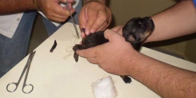proibido-cortar-rabo-dos-caes