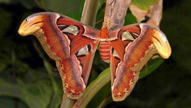 borboletas-que-sao-mestres-da-camuflagem-4