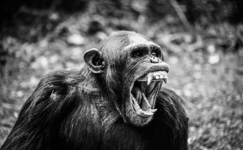 É preciso falar sobre o chimpanzé pilotando o Boeing