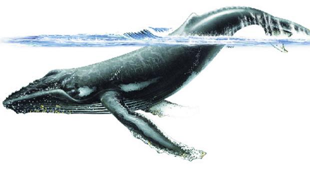 Baleia come flores