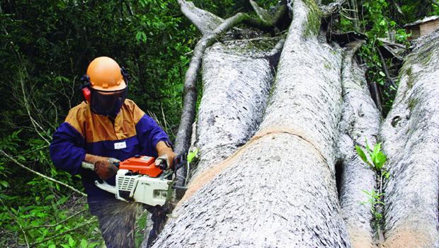 Bancada ruralista quer flexibilização de normas ambientais