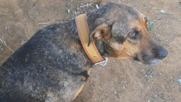 Câmara aprova lei que aumenta em 150% multa para quem maltratar animais