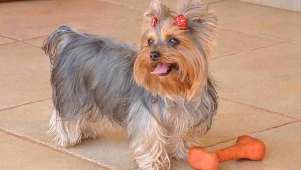 Justiça suspende sacrifício de cachorro com suspeita de leishmaniose