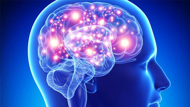 cerebro 620