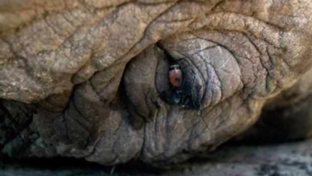 Elefantes também choram