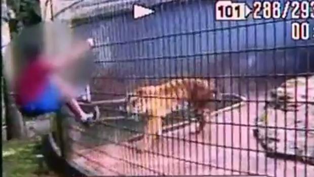 Menino que teve braço dilacerado por tigre ganha prótese