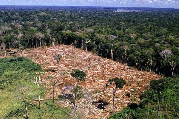 Amazônia acumula 762 mil km² de desmatamento em 40 anos, diz estudo