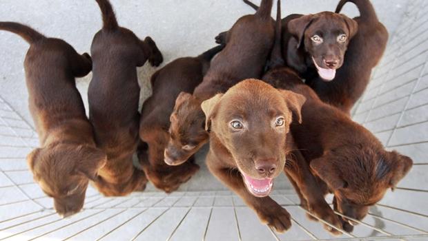 Feira de adoção de animais movimenta sábado do Setor Jaó
