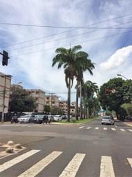 Palmeiras foram retiradas para obras do transporte coletivo| Foto: Reprodução/Twitter