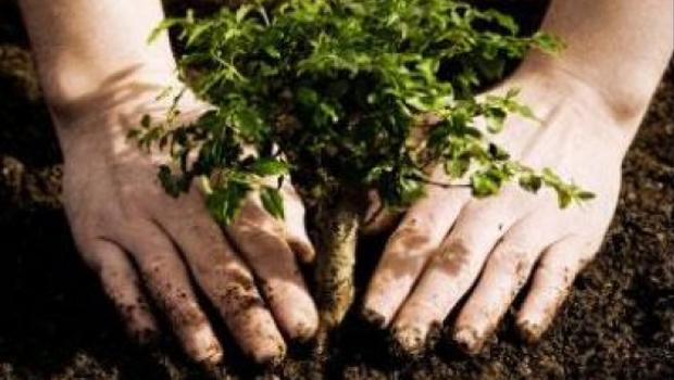 Prefeitura promove recuperação de áreas nascentes e plantio de 600 árvores