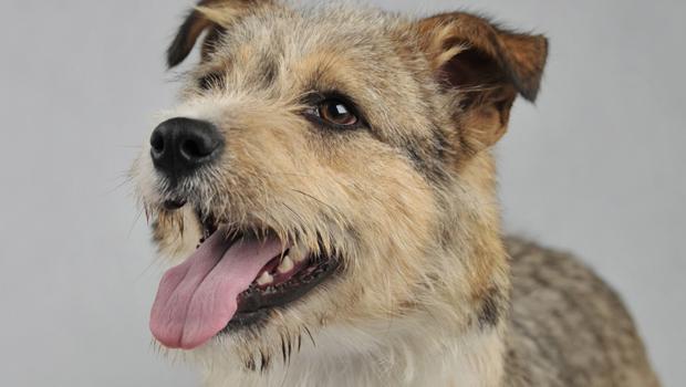 Câmara aprova projeto que torna crime violência contra cães e gatos