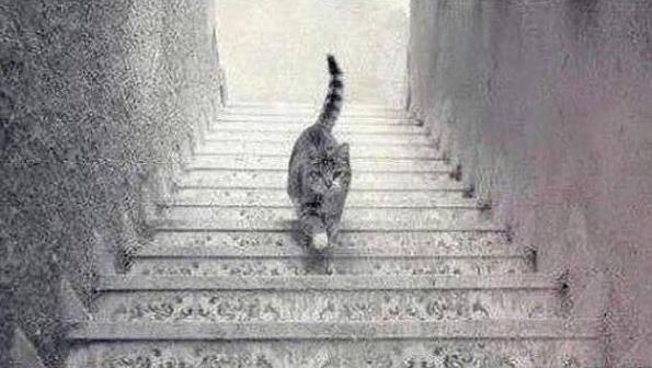 Foto viraliza na internet após causar debate se gato estaria subindo ou descendo a escada