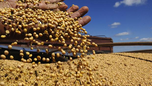 Em Goiás safra de grãos deve crescer 7,5% e chegar a 22,8 milhões de toneladas