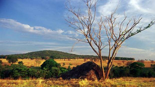 O Cerrado é tão vital quanto a Amazônia e precisa cada vez mais virar notícia