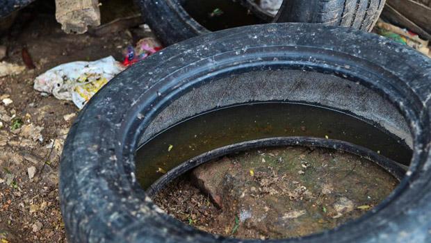 Novo levantamento sobre Aedes Aegypti aponta que Goiânia apresenta risco de epidemia