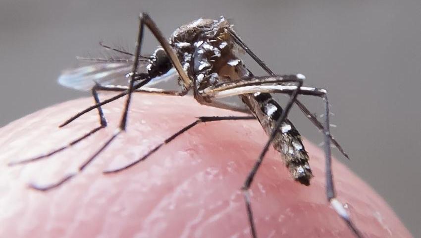 Com apenas 93 casos, Goiânia está fora do mapa da epidemia de dengue no Brasil