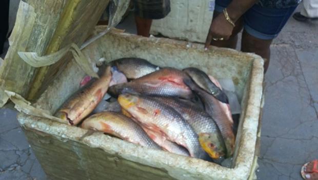 Pescado foi apreendido na BR-060, em Rio Verde | Divulgação/PRF