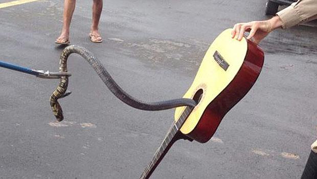 Luziânia: serpente de um metro é encontrada dentro de violão