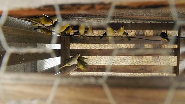 PF cumpre mandados em Aparecida de Goiânia em investigação sobre tráfico de animais silvestres