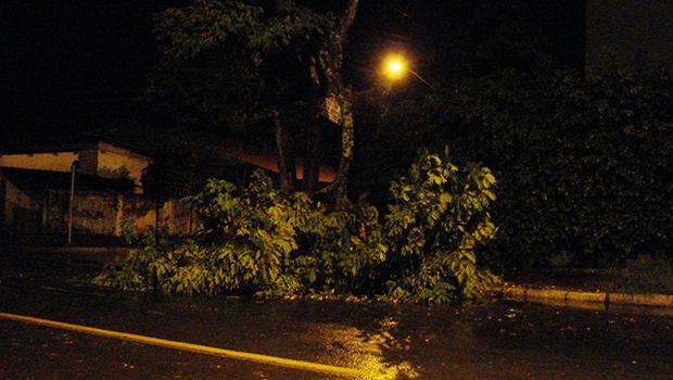 Árvore caída no Setor Crimeia Oeste, em Goiânia   Marcello Dantas
