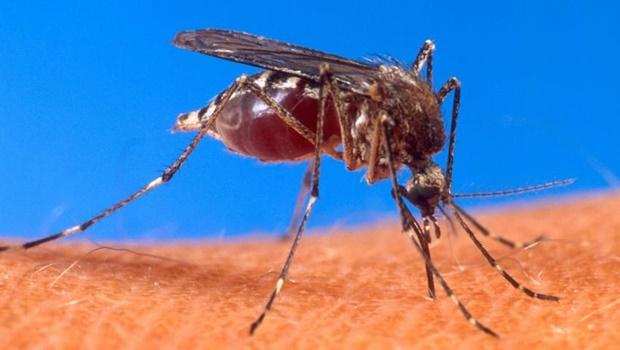 Mais uma epidemia pode atingir Goiás. Conheça a febre Mayaro