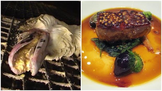 Vereadores aprovam projeto que proíbe foie gras em Goiânia