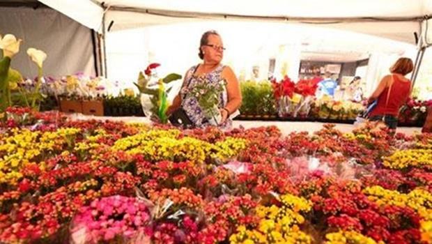 Goiânia recebe exposição de flores direto de Holambra