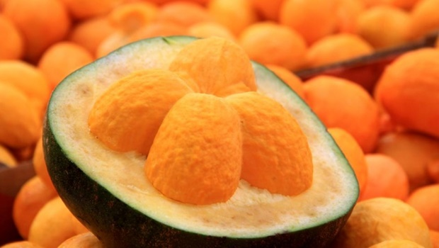 O Tocantins é o segundo maior produtor do pequi | Foto/Sebrae