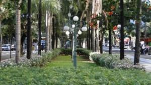 Canteiros centrais da Avenida Goiás estão sob ameaça: projeto do BRT pode destruir o paisagismo da via | Foto: Divulgação