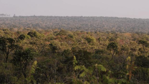 Cerrado recebe projeto para conservação da biodiversidade