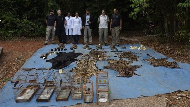 Polícia encontrou cabeças, patas e peles cortadas de felinos, como a onça pintada, e aves confinadas em gaiolas | Foto: Alysson Souza/ICMBio