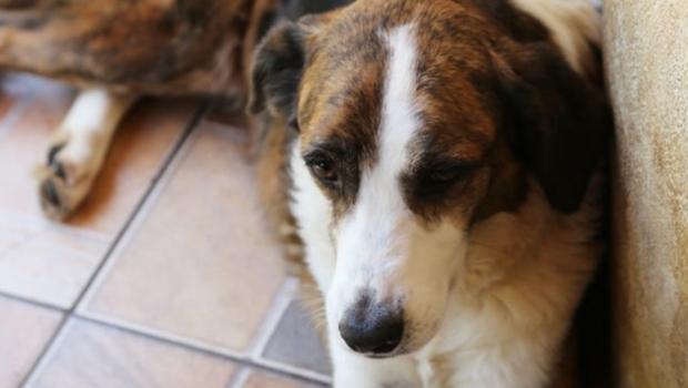 Câmara de Goiânia vota projeto que permite enterrar cães e gatos juntos de seus donos