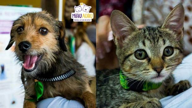 Grupo Miau Auau promove evento de adoção de animais no Passeio das Águas