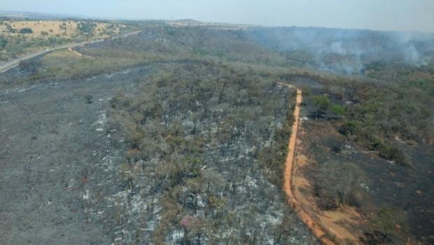 Incêndio no Parque Altamiro Pacheco foi criminoso, revela secretaria