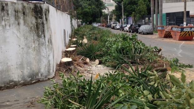 Prefeitura de Goiânia autoriza retirada de dezenas de árvores saudáveis do Setor Marista